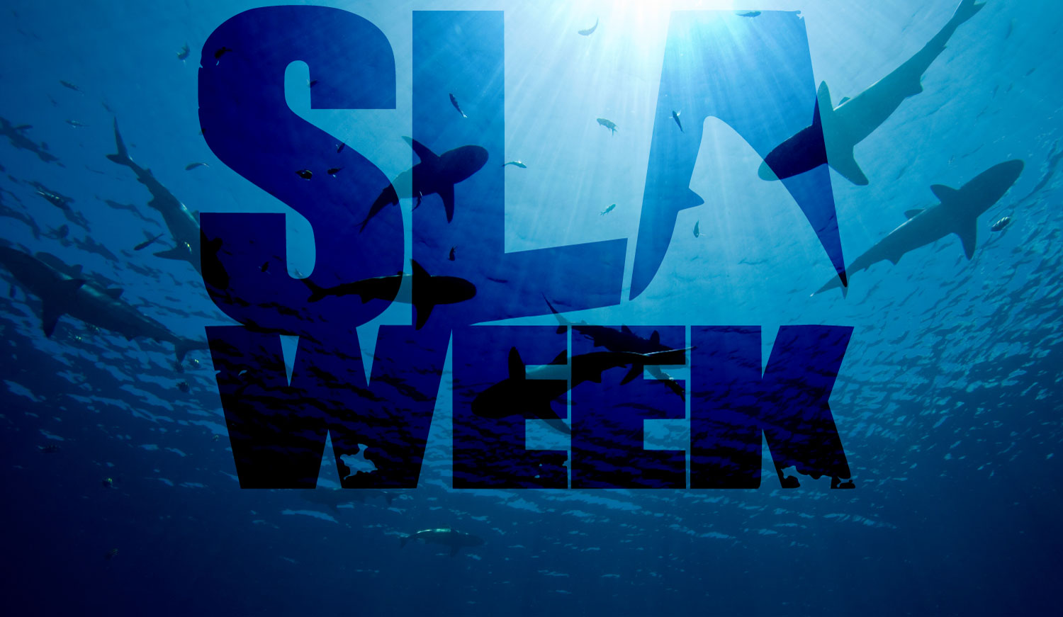 Like Shark Week for network management SLAs